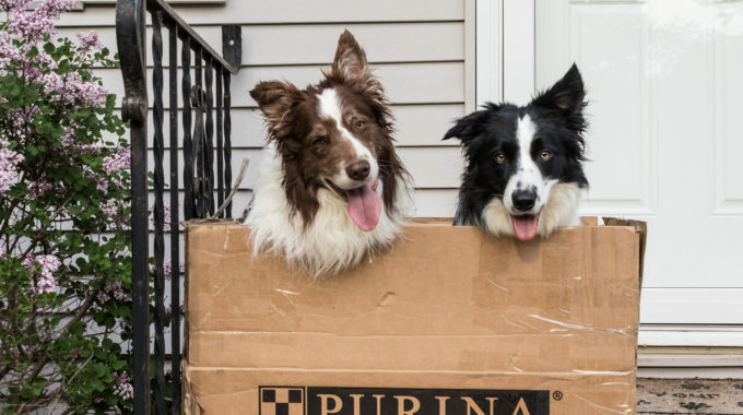 Purina ONE vs Purina Pro Plan: Which Is Better?