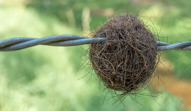 Cats Can't Cough Up Hairball? What Should You Do?