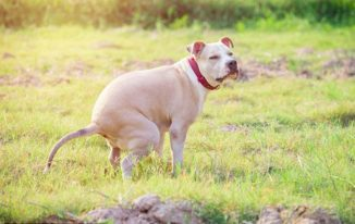 Your Dog Hasn't Pooped In 2 Days? Causes & Preventions!