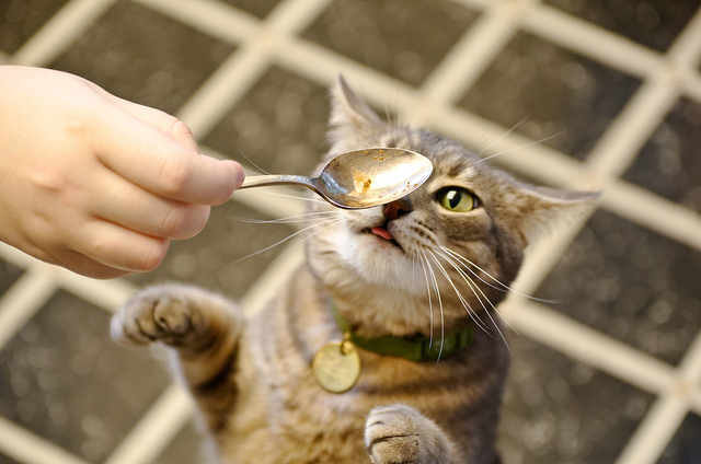 How To Prepare Raw Food For Cats
