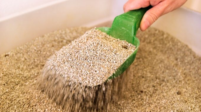 Best Sifting Cat Litter Box – Reviews and Buying Guides 2018