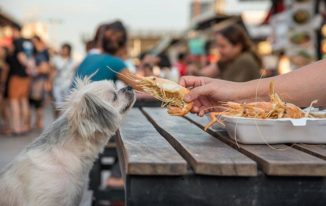 Can Dogs Eat Cooked Shrimp?