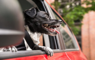 Best Dog Seat Belt – Reviews and Buying Guide for 2018