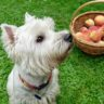 Are Peaches Safe for Dogs?