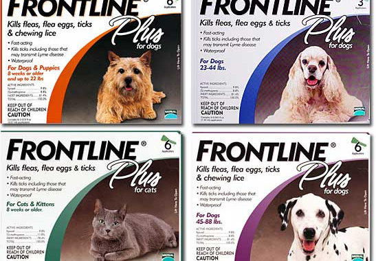Can I Use Frontline Plus For Dogs On Cats?