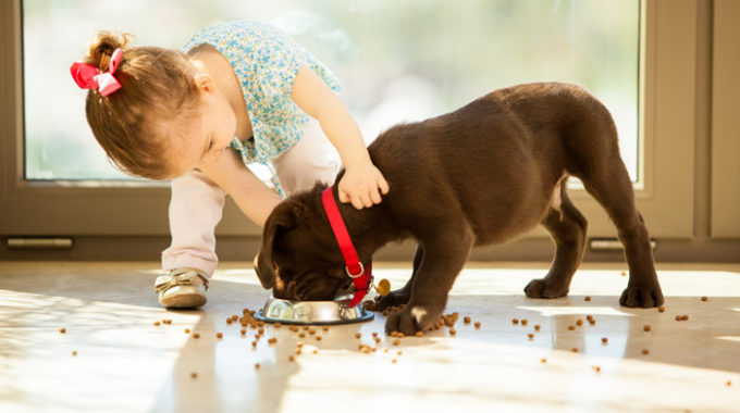How Long Should A Dog Eat Puppy Food?