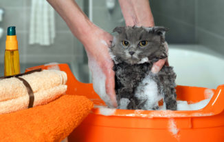 Is Baby Shampoo Safe For Cats?