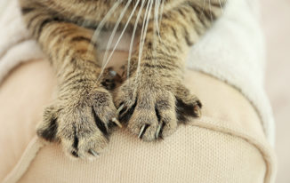 How To Keep Cats From Scratching Leather Furniture