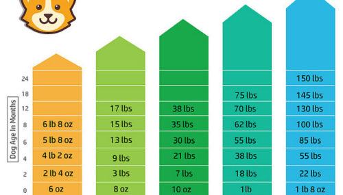 Puppy Growth Chart – The Simplest Way To Figure Out Your Puppy's Adult Weight