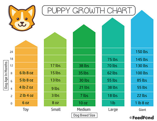 Puppy Growth Chart The Simplest Way To Figure Out Your Puppys