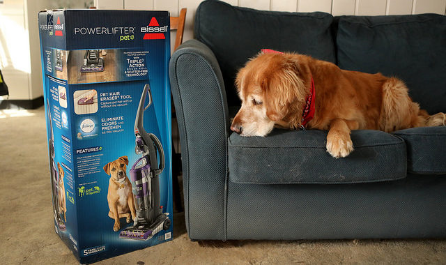Great Gifts For Dog Lovers to Enjoy