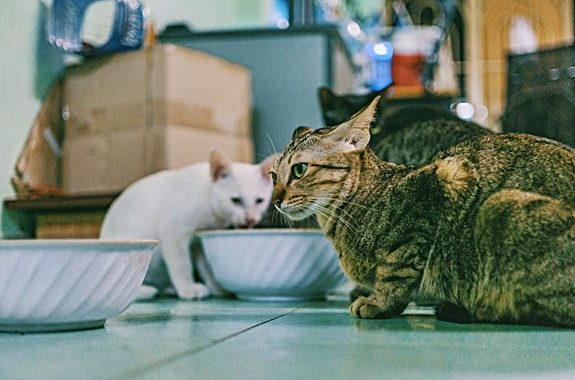 How to Deal with Mobility Problems in Cats