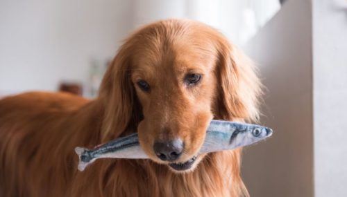 Can Dogs Eat Tuna Fish? Discover Both Good And Bad!