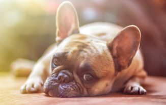 Here's Why You Should Check Out CBD Oil For Dogs
