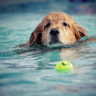 Train Your Canine Dog Trainers: Why Put in Effort on Dog Training