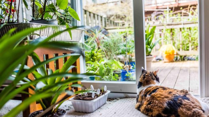 7 Plants to Keep Your Kitty Smiling And Healthy